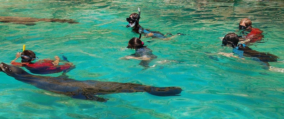 Encounter + Snorkeling with Sea Lions at Animal Magic Natura, Waterpark Magic Natura Animal, Waterpark Resort Benidorm